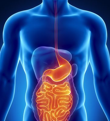 The Science Behind Kidney Disease Prevention