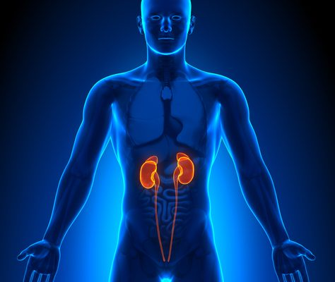 What Causes Kidney Disease?