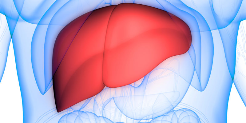 What are the Four Stages of Liver Disease?
